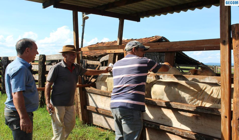 Imagem destaque notícia PROSSEGUE A CAMPANHA DE VACINAÇÃO CONTRA A AFTOSA NO MUNICÍPIO