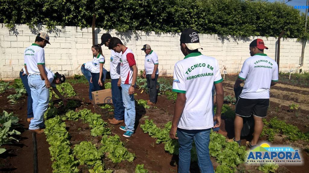 Imagem destaque notícia Projeto Horta na Escola apresenta os primeiros resultados