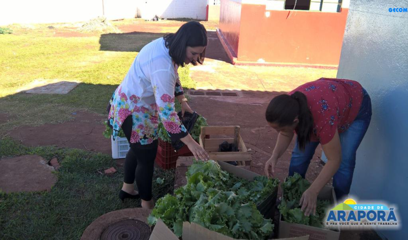 Imagem destaque notícia Comunidade e unidades de ensino recebem doação da produção da horta da Escola Olintha